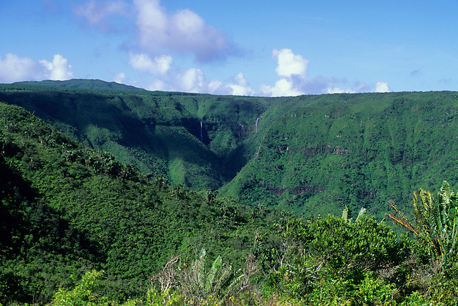 MAURITIUS, BLACK RIVER GORGE, NATIVE FOREST