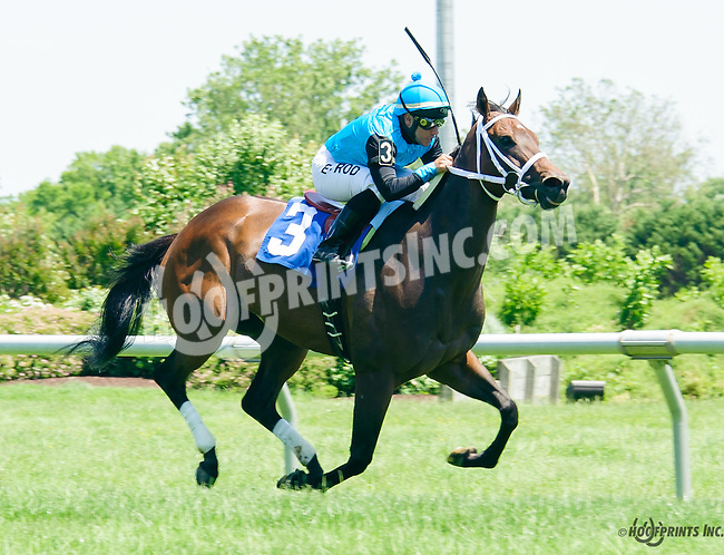 Be Nice or Leave winning at Delaware Park on 6/9/16