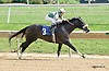 Jive Partner winning at Delaware Park on 9/11/14