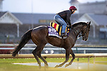 November 1, 2018: Sergei Prokofiev, trained by Aidan P. O'Brien, exercises in preparation for the Breeders' Cup Juvenile Turf Sprint at Churchill Downs on November 1, 2018 in Louisville, Kentucky. Alex Evers/Eclipse Sportswire/CSM