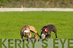 Action the National Coursing Meeting in Clonmel on Wednesday.
