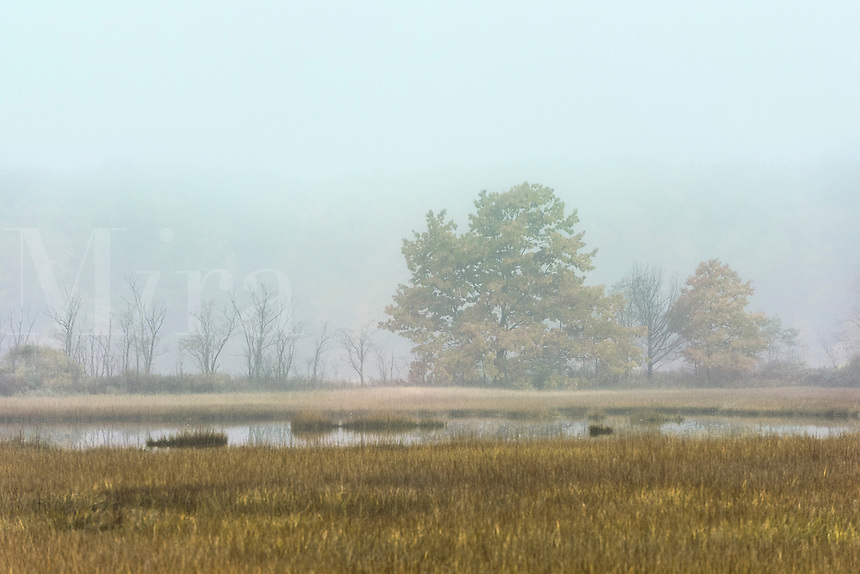 Autumn field in soft morning mist, Scarborough, Maine, USA.