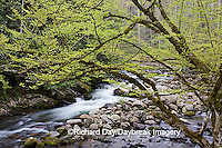 66745-038.10 Middle Prong of the Little River in spring, Tremont Area, Great Smoky Mountain National Park, TN