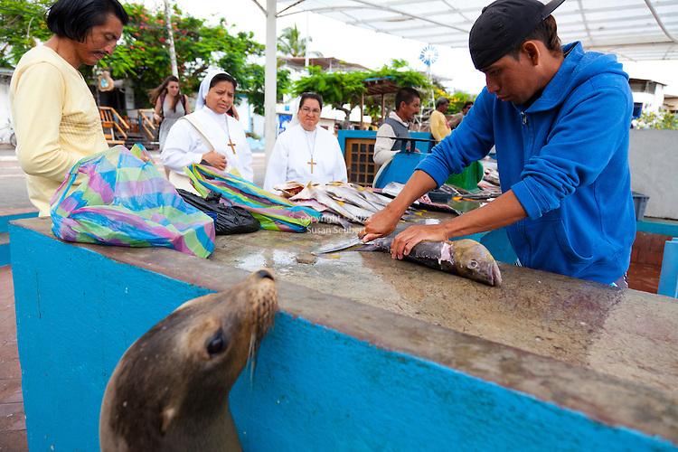 Santa Cruz Island, home to giant tortoises and the Charles Darwin Research Center, Galapagos National Park, Galapagos, Ecuador. The fish market on Santa Cruz Island in the small town of Puerto Ayora
