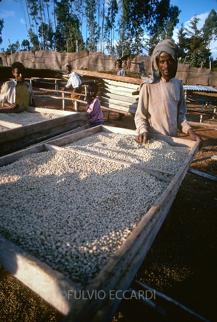 Ethiopia, Hafursa, Yirga Chefe, service, cooperative, coffee, coffea, organic, beans, arabica, process, dry, table,  worker, man, men