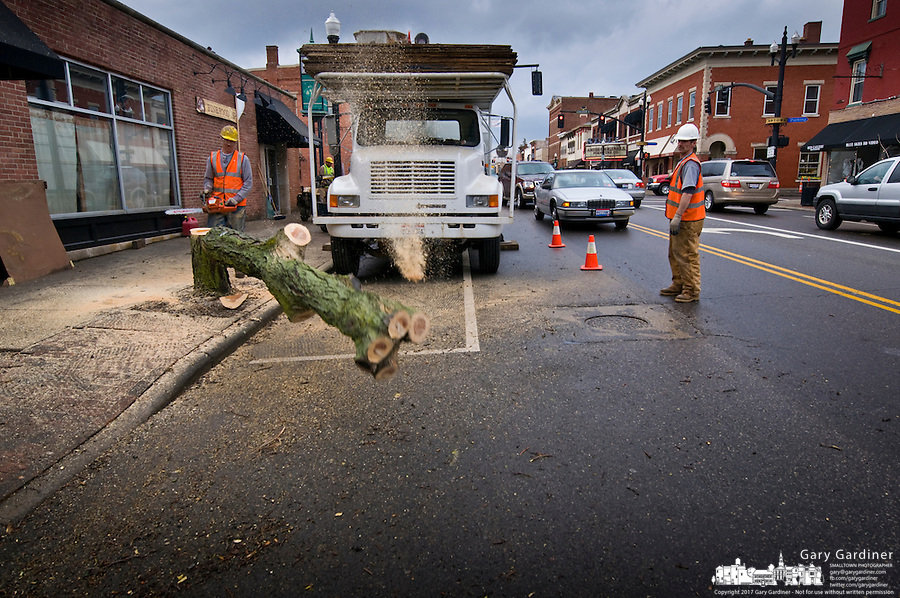 The final honey locust tree on State Street is cut down as part of a revitalization plan for Uptown Westerville landscaping.  Photo Copyright Gary Gardiner. Not be used without written permission detailing exact usage.