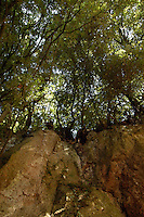 Sutri (VITERBO) è un comune di circa seimila abitanti sulla via Cassia.Fa parte dell'Associazione dei Comuni Italiani sulla Via Francigena,come passaggio per i pellegrini diretti a Roma da nord.Sutri (Viterbo) is a town of about six thousand inhabitants.He is a member of the Association of Italian Municipalities on the Via Francigena, as a passage for pilgrims to  North Rome.....