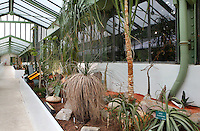 Desert and Arid Lands Glasshouse, 1930s, Jardin des Plantes, Museum National d'Histoire Naturelle, Paris, France. Low angle view of the recently restored and redeveloped glasshouse with cactae and rocks.