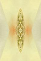 Yulan Magnolia close-up