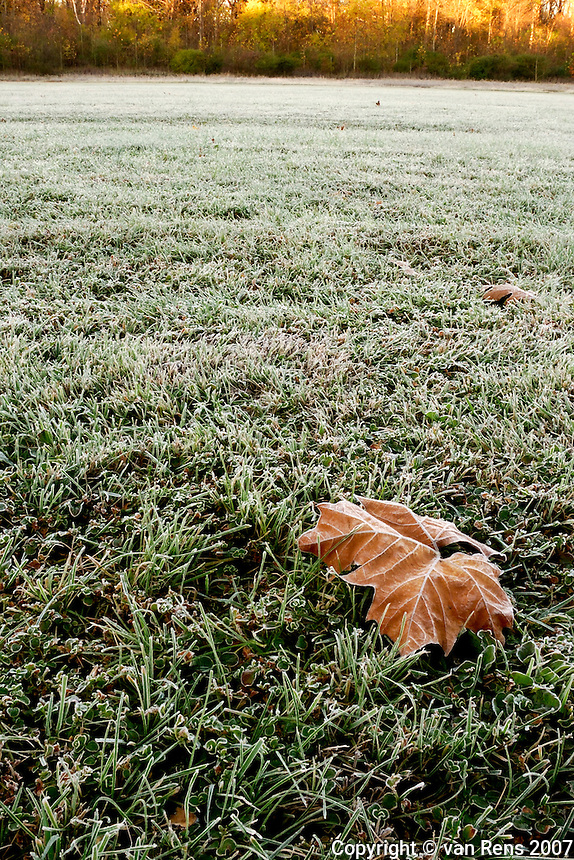 Frosted isolated leaf in morning meadow