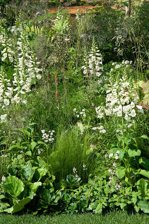 """Mixed border containing Digitalis purpurea 'Camelot Cream', """"I am, because of who we are"""" show garden, designed by Caroline Comber with Petra Horackova, Hampton Court Flower Show 2011."""
