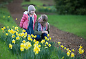 28/01/16 <br /> <br /> Enjoying a brief break in the stormy weather, Anouk Taylor (3) and her mother Julia Taylor explore the daffodils and snowdrops blooming in the gardens of Rode Hall, Scholar Green, Cheshire. The gardens open for snowdrop walks from Saturday.<br /> <br /> All Rights Reserved: F Stop Press Ltd. +44(0)1335 418365   +44 (0)7765 242650 www.fstoppress.com