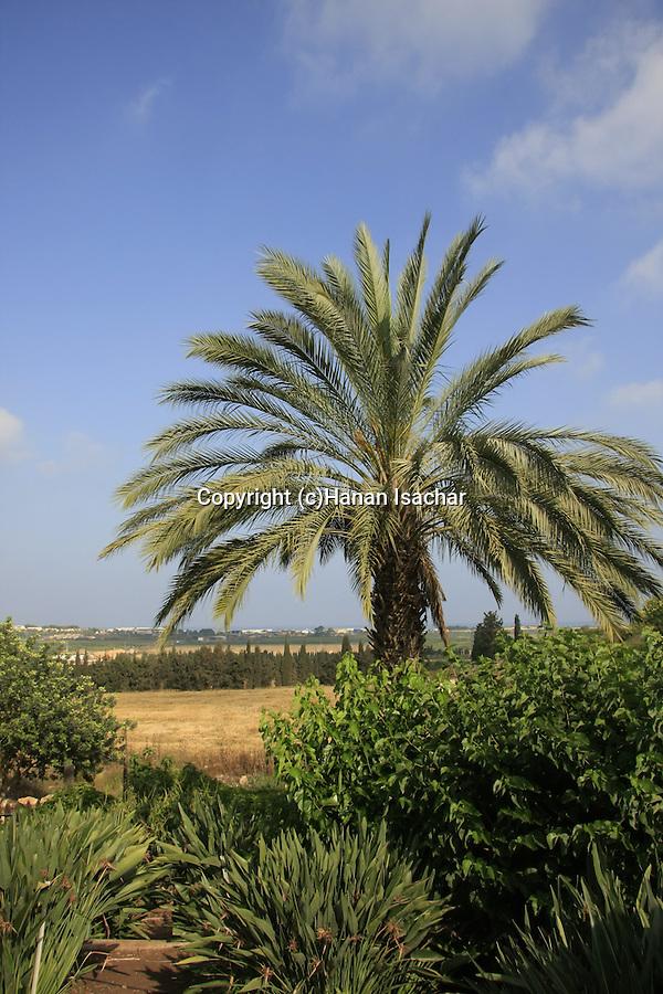 Israel, Carmel Coastal Plain. Bustan Hacarmel tropical tree garden