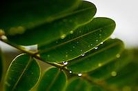 Curitiba_PR, Brasil...Parque do Tangua em Curitiba, Parana. Na foto detalhe de uma planta...Tangua Park in Curitiba, Parana. In this photo a plant detail...Foto: BRUNO MAGALHAES / NITRO