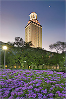 With a foreground of beautiful flower, the UT Tower sits in the middle of the Texas Campus in beautiful Austin, Texas. This image was taken on the south mall just after sunset.