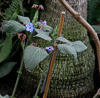 Tropical Rainforest Glasshouse (formerly Le Jardin d'Hiver or Winter Gardens), 1936, René Berger, Jardin des Plantes, Museum National d'Histoire Naturelle, Paris, France. Detail of plant against the trunk of a Howea Forsteriana tree.