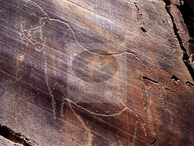 Gravuras de Foz-Coa. Parque Arqueologico do Coa