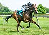 Harv Won't Tap winning at Delaware Park on 6/29/17
