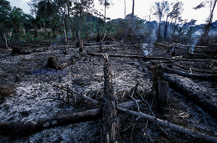 Villagers burn plots of forest and the slash left after clearcutting of the tropical rainforest to cultivate the soil, the practice of traditional slash and burn or milpa agriculture. They start close to their villages, then progress farther into the forest because the rainforest soil becomes exhausted quickly. Yabogengo, Oriental Province, Democratic Republic of Congo.