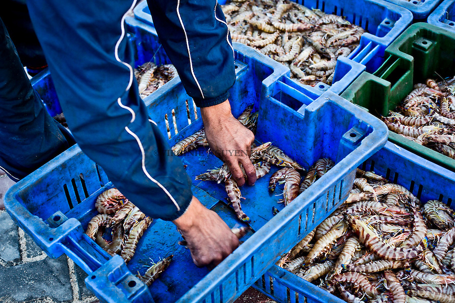 Gaza port: The most expensive price is always given to the prawns.<br /> <br /> Port de Gaza: le prix le plus cher revient toujours aux crevettes.
