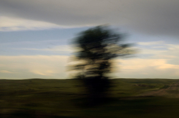 Tree Blur From Amtrak