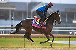 November 1, 2018: Just Wonderful, trained by Aidan P. O'Brien, exercises in preparation for the Breeders' Cup Juvenile Fillies Turf at Churchill Downs on November 1, 2018 in Louisville, Kentucky. Alex Evers/Eclipse Sportswire/CSM