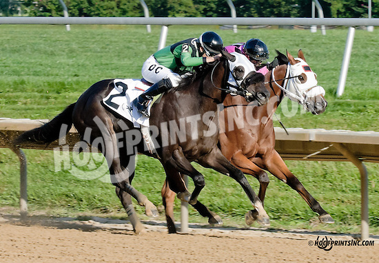 Managed Account winning The DTHA Governors Day Stakes at Delaware Park on 9/14/13