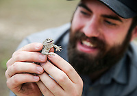 Yfat Yossifor / Standard-Times<br /> San Angelo native Austin Osmanski holds an eastern collared lizard he is capturing for his class to see Thursday, May 19, at Texas Tech University Center at Junction.