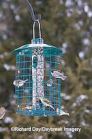 00585-036.14 American Goldfinches (Carduelis tristis) & Carolina Chickadee at Squirrel proof feeder, Marion Co. IL