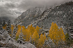 Early Winter Storm, San Juan Mountains near Ouray, Colorado