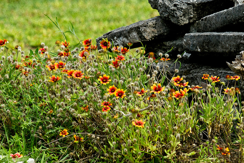 This colorful cluster seems to have gathered by the stone gray wall, leaning in to hear their tale.<br />