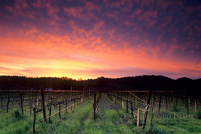 Barren vineyard and winter sunset. along Dry Creek Road, Sonoma County, California