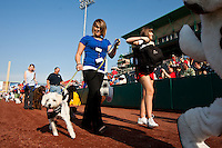 "Springfield Cardinals Fans walk with their dog around the field prior to a game between the Arkansas Travelers and the Springfield Cardinals at Hammons Field on May 5, 2012 in Springfield, Missouri. Saturday's game was called ""A Bark in the Park"" Night, and fans could bring their dogs to Hammons Field with them. (David Welker/Four Seam Images)"