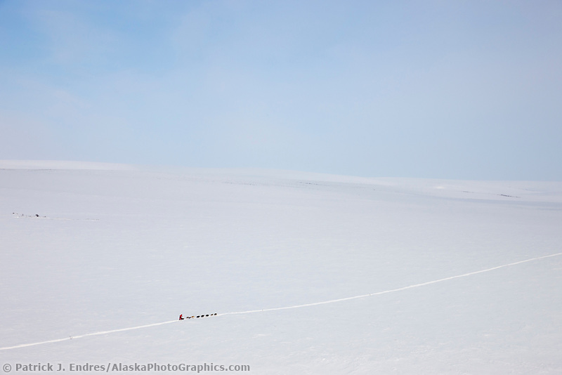 Musher Lance Mackey crosses the tundra north of the Gold Run checkpoint on the way to Candle during the 2008 All Alaska Sweepstakes sled dog race.