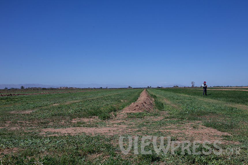 MEXICALI, MEXICO - March 13 . A general view of an alfalfa cultivation field while Miguel Angulo checks the land that used to be sand. on March 13, 2019 in Mexicali, Mexico.<br /> The rivers usually end in the sea, the Colorado dies in a border. Its the only case like this in the world. There is less water in the Colorado River, hence less water in crops and areas of northern Mexico.  <br /> (Photo by Luis Boza/VIEWpress)
