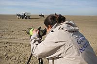 Europe/France/Picardie/80/Somme/Baie de Somme/Saint-Quentin-en-Tourmont : Sortir Nature en calèche avec un guide ornithologique, Parc du Marquenterre  Auto N°:2008-208   Auto N°:2008-209