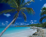 Antigua, West Indies   <br /> Palm tree framing the view of Dickinson Bay and distant Weatherills Point - Caribbean Islands