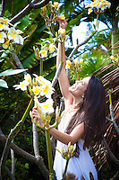 Beautiful Hawaiian woman hand-picking plumerias from a tree in order to make a lei