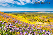 Tom Mackie, LANDSCAPES, LANDSCHAFTEN, PAISAJES, photos,+America, California, Carizzo Plain National Monument, North America, Tom Mackie, USA, bloom, blooming, blue, color, colorful,+colour, colourful, field, fields, hill, hills, hillside, horizontal, horizontals, landscape, landscapes, super bloom, wild f+lower, wildflower, wildflowers, yellow,America, California, Carizzo Plain National Monument, North America, Tom Mackie, USA,+bloom, blooming, blue, color, colorful, colour, colourful, field, fields, hill, hills, hillside, horizontal, horizontals, lan+,GBTM170259-1,#L#, EVERYDAY