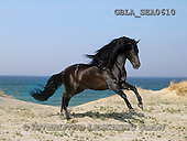 Bob, ANIMALS, collage, horses, photos(GBLASEA0610,#A#) Pferde, caballos
