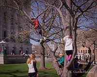 The trees on the State Capitol lawn sprout children during the weekly farmers' market and other events.