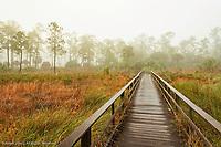 Boardwalk through wet prairie and pine forest, Audubon Corkscrew Swamp Sanctuary, Florida