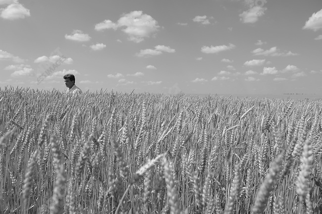 Alexander Almazov, the deputy director of the Agro-Invest filial at Stanovoye, Lipetsk region, waded through some of the wheat fields on the company's local holdings of over 20,000 hectares. Russia, July 14, 2008.