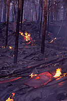 A large flow of lava spreads thru a burned up forest, Hawaii Volcanoes National Park, Big Island, Hawaii, USA