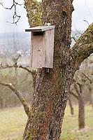 Vogel-Nistkasten für Halbhöhlenbrüter an Obstbaum