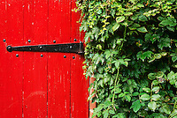 Red garden door with ivy wall.