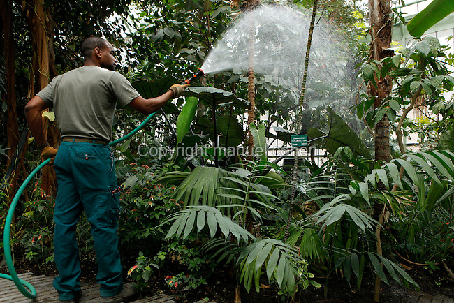 Tropical Rainforest Glasshouse (formerly Le Jardin d'Hiver or Winter Gardens), 1936, René Berger, Jardin des Plantes, Museum National d'Histoire Naturelle, Paris, France. Low angle view of Rudolf Guillaume, gardener, watering the Tropical plants in the Art Deco style Glasshouse.