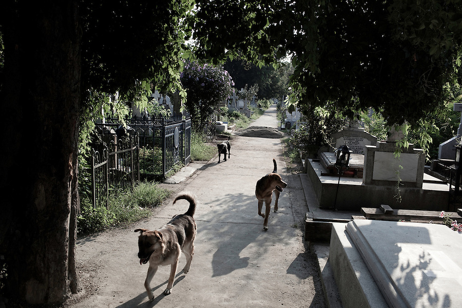 ROMANIA / Bucharest / 23 July 2010 / Stray dogs pass near the grave of Elena Ceausescu in Ghencea Cemetery in Bucharest. Scientists exhumed the remains of both dictator Nicolae Ceausescu and his wife after a request from their family who for years have doubted that they were really buried there. The Ceausescus were executed following a show trial on 25 December 1989 during The Romanian Revolution and were quickly buried in unmarked graves in the  military cemetery. On Wednesday, 21 July the graves were dug up and DNA samples were taken for testing. The location of the Ceausescus is one of the many mysteries that still surround the events of the Revolution. © Davin Ellicson / Anzenberger