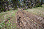 Image taken June 2009 in T17 N, R15 E.  Kittitas County, Washington.   ORV damage in Section 17