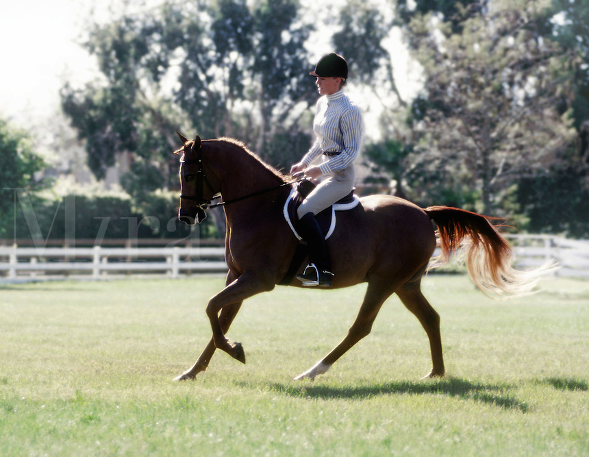 Young woman riding English Hunt seat during Horse Show competition